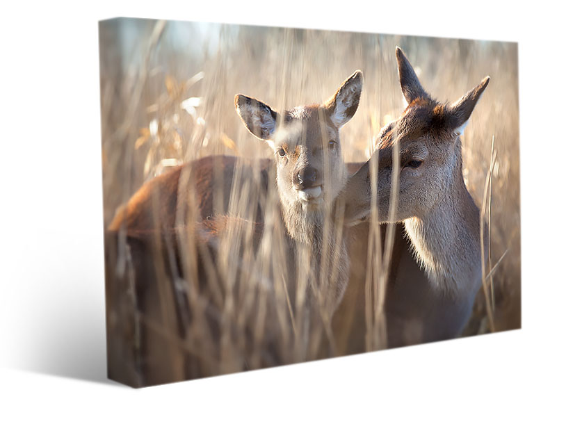 stretched canvas print deer mother
