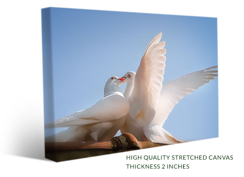A birds canvas print with two white doves kissing