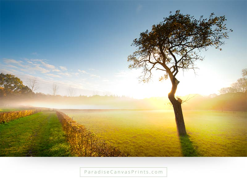 Lonely Tree In Misty Meadow At Sunset - Canvas Print - Paradise ...