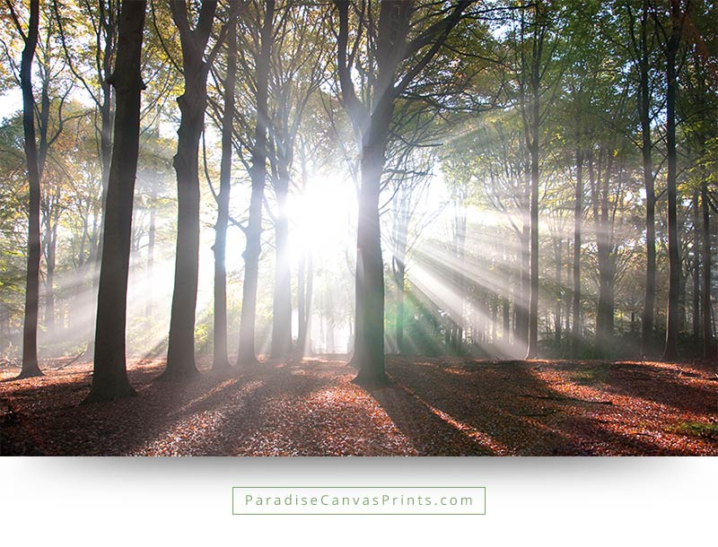 intense sunlight shining through the trees canvas print paradise