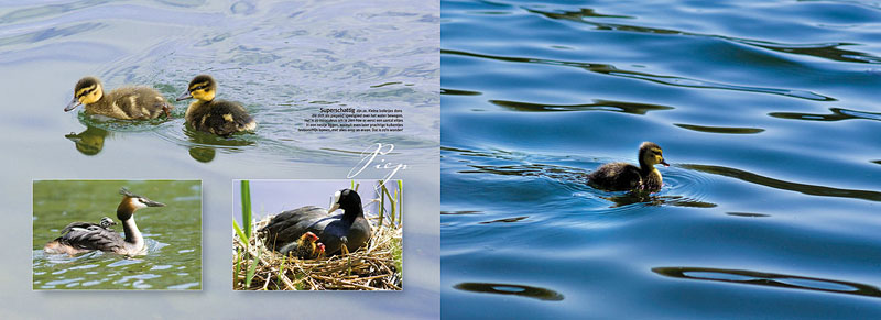 david sorensen nature photography book