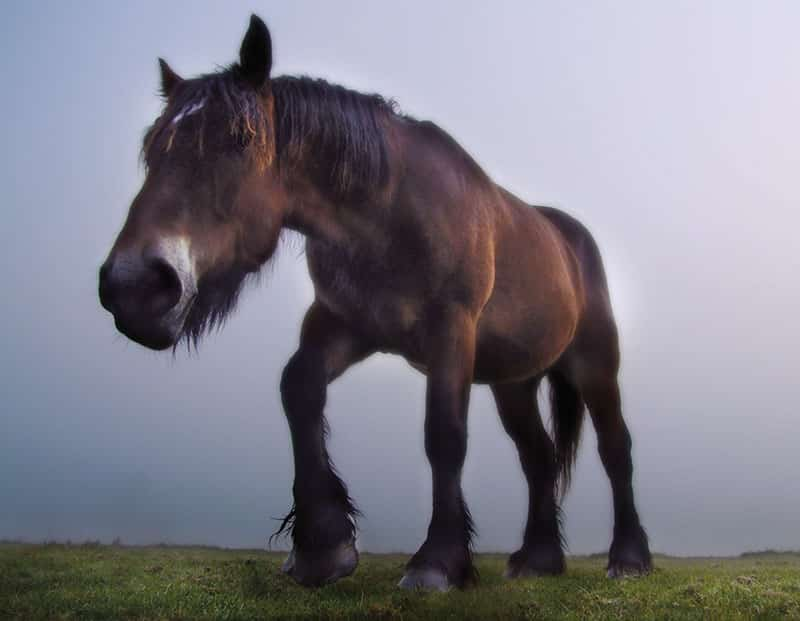 david sorensen nature photography horse