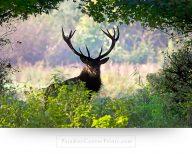 deer wall art canvas print