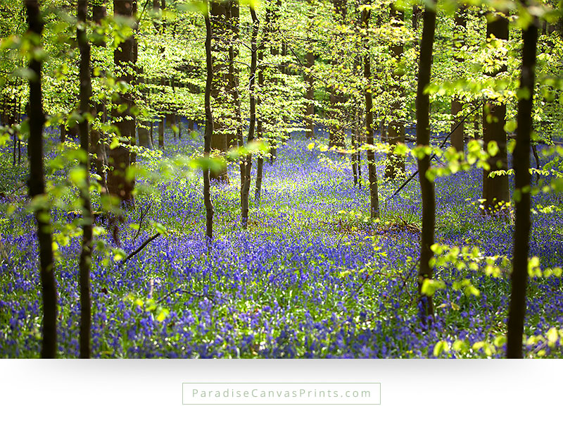 Beautiful Forest With Wildflowers In Spring Canvas Print