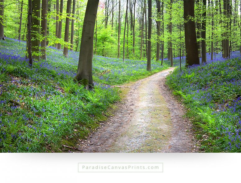 Living room wall art - Path through forest with wildflowers