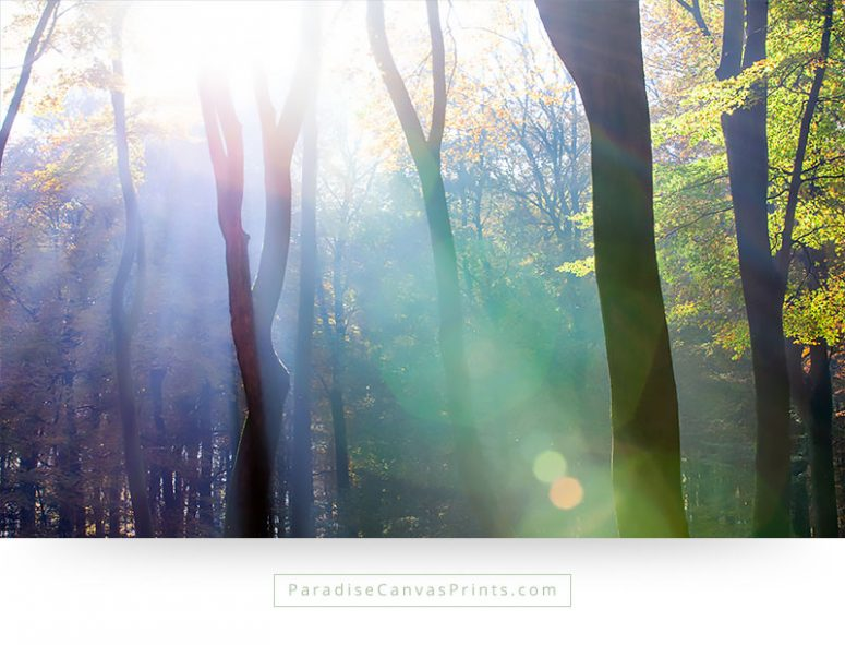 Living room wall art - Photo of sunlight through trees in a forest