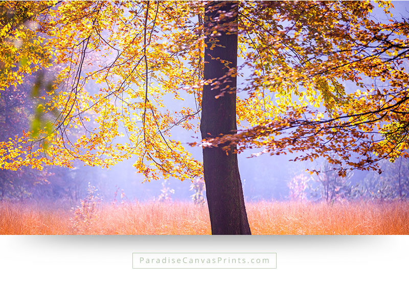 Living room wall art - Tree in beautiful fall colors illuminated by sunlight