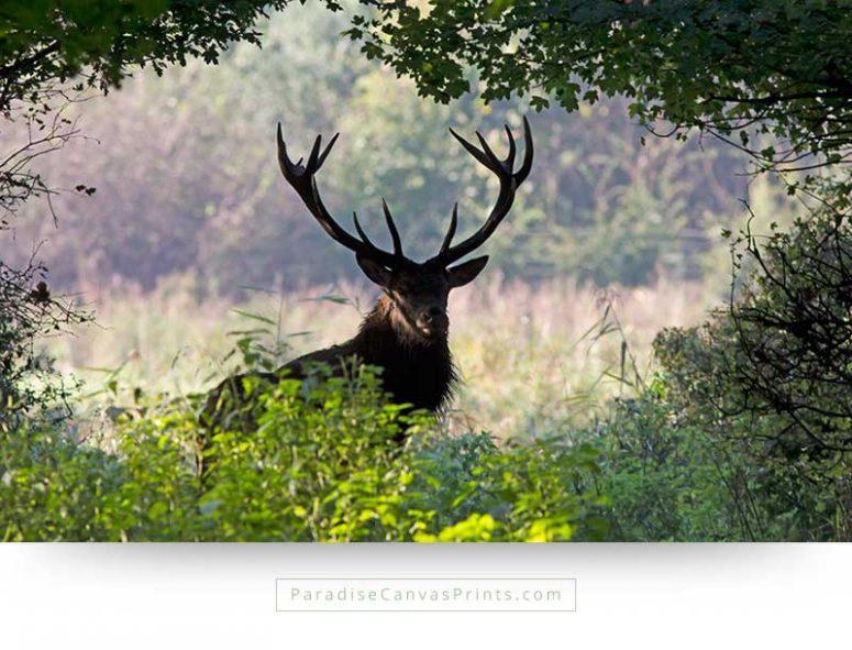 Wildlife canvas print photo of wild deer with antlers