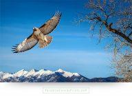 colorado wall art hawk branches mountains