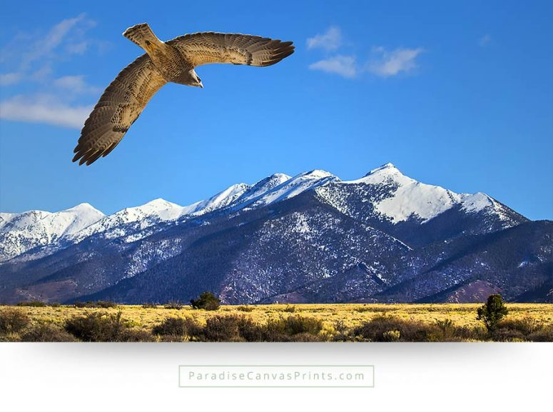 colorado wall art hawk mountains