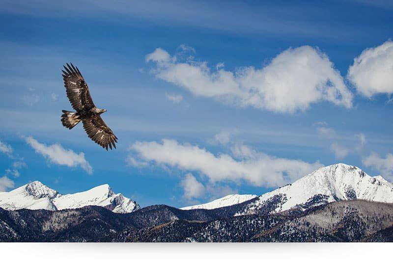 Eagle Kingdom