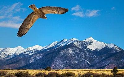 birds canvas prints hawk mountain