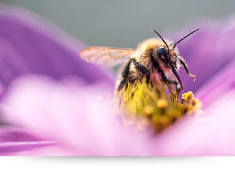 Secret Nectar