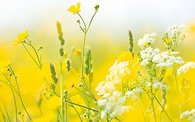 flower canvas prints - white and yellow summer wildflowers