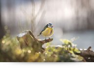 Songbird In Winter