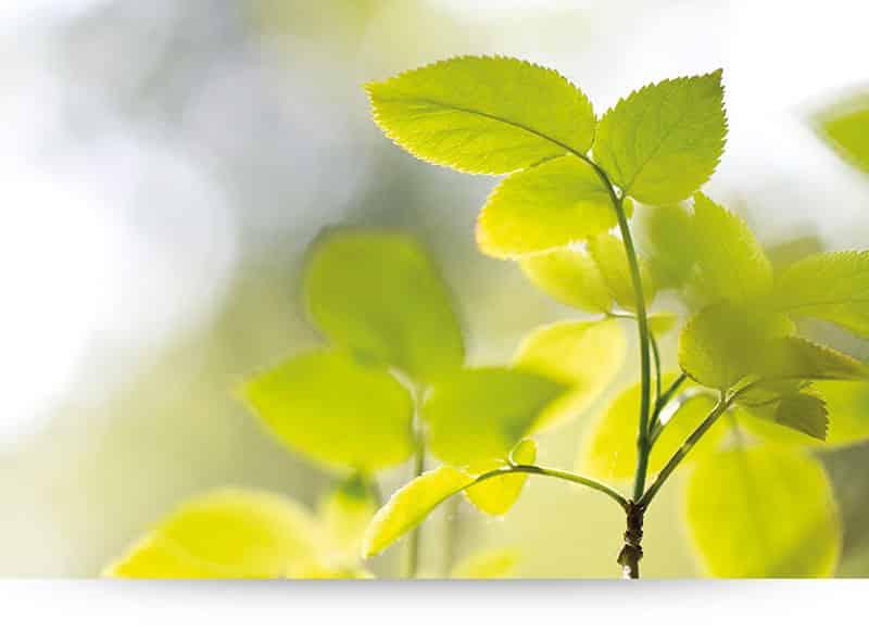 Bright Leaves - Wall Art, Canvas Print - Paradise Canvas Prints