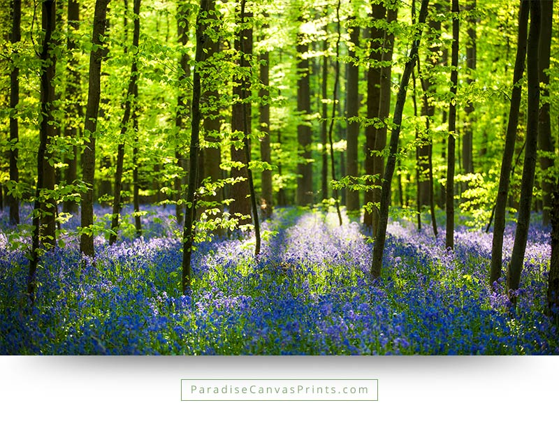 forest wildflowers with bright sunlight wall art canvas print