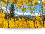 colorado wall art aspen fall colors mountain