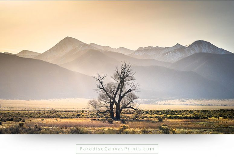 colorado wall art landscape tree valley desert mountains