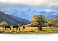 colorado wall art horses valley mountains