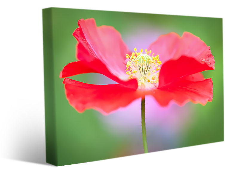The beauty of flowers on canvas prints