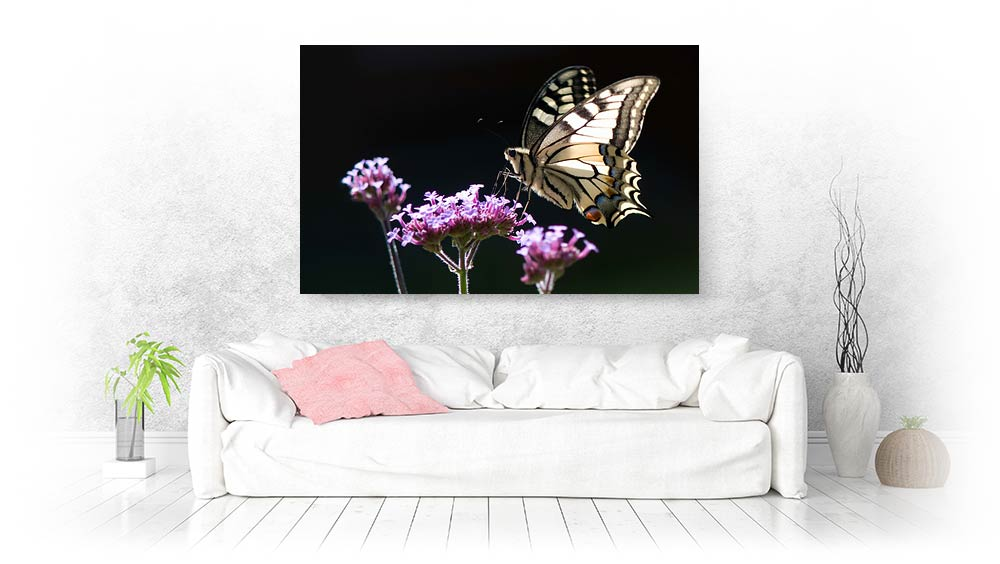butterfly canvas prints and photos