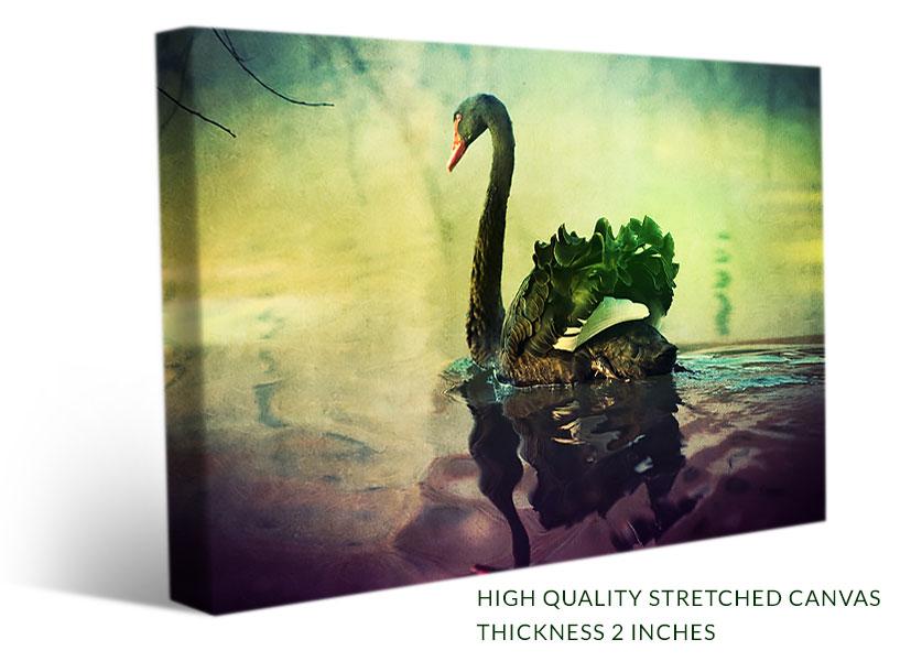 Beautiful Black Swan - Wall Art, Canvas Print - Paradise Canvas Prints