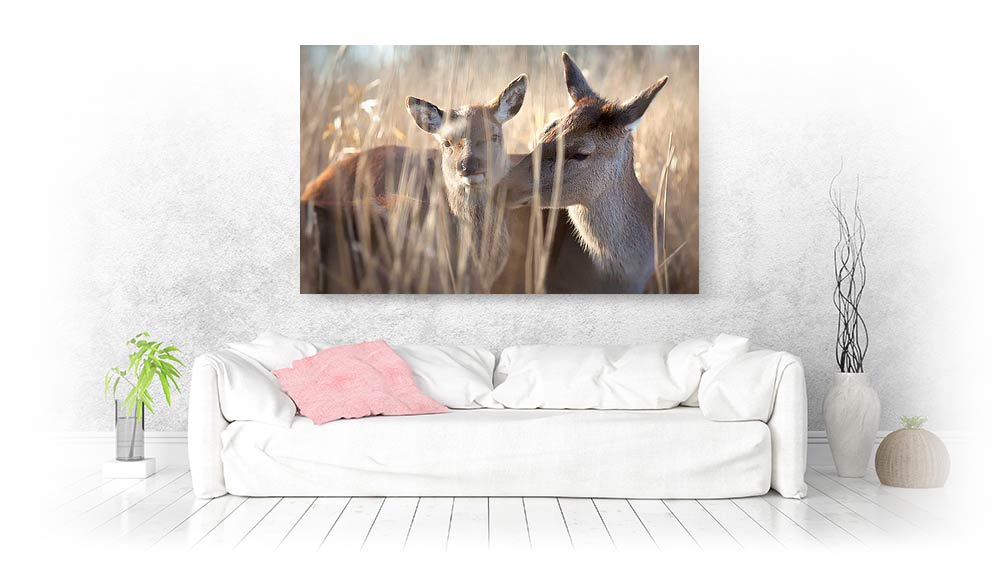 wildlife animals canvas prints