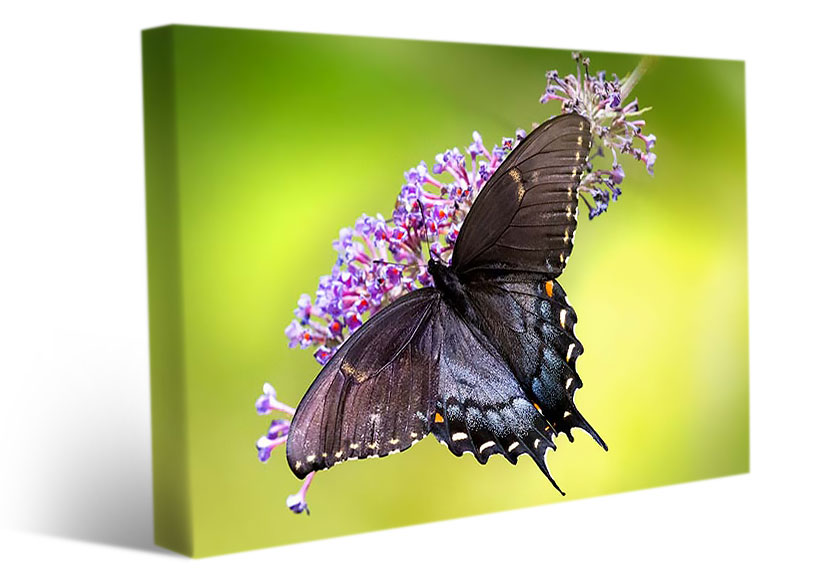 living room wall art butterfly