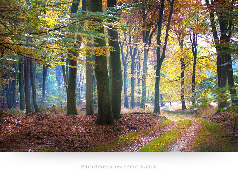 Living room wall art - Path through beautiful forest