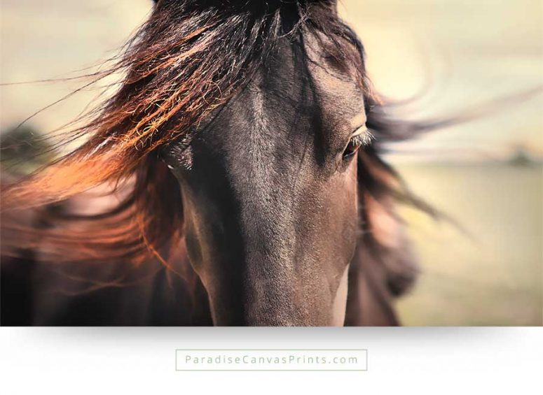 horse wall art canvas print portrait closeup