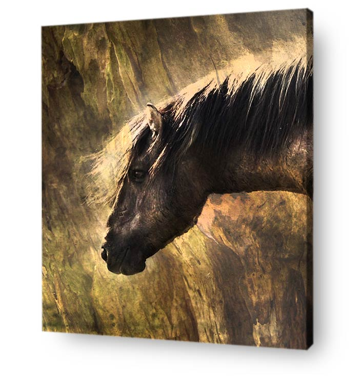 horse wall art canvas print - portrait of wild horse on wood