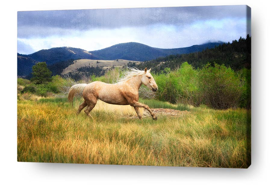 Enchanting Horse Wall Art Component - Art & Wall Decor - hecatalog.info
