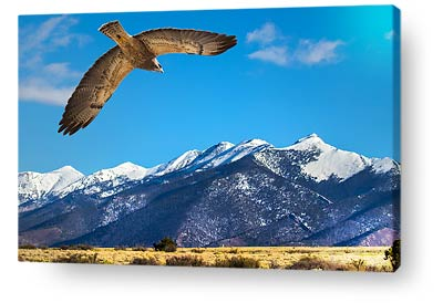 birds canvas art hawk mountains