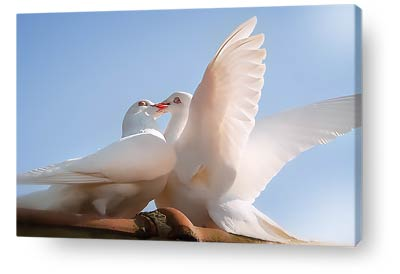 birds wall art doves kissing