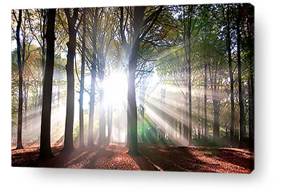 canvas print wall art sunlight trees