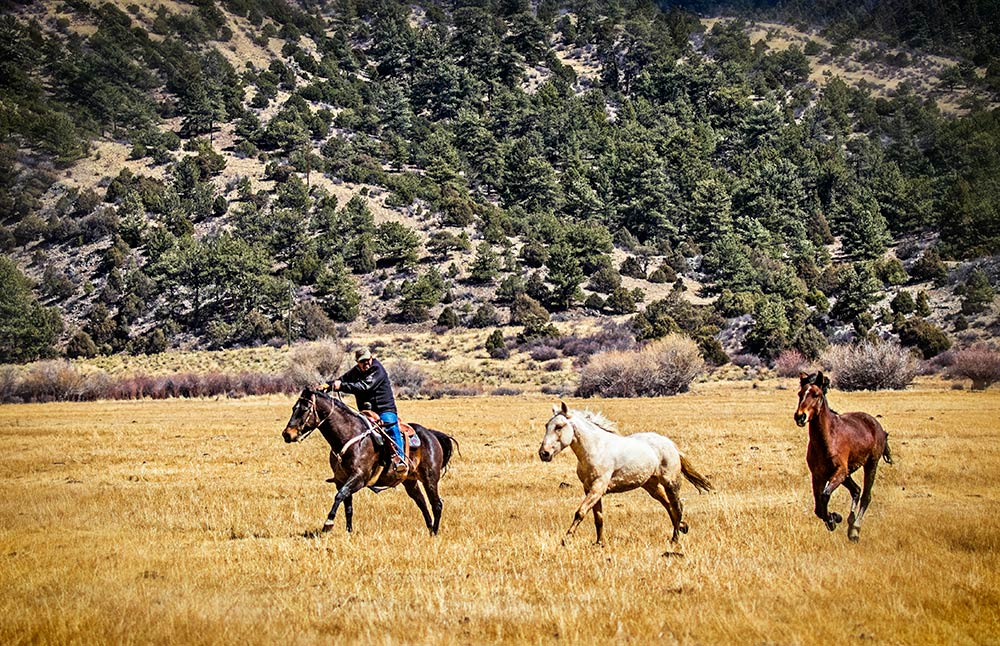 catching wild mustang horses