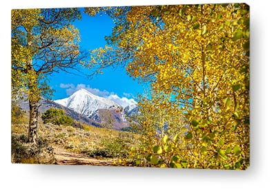 colorado wall art snowpeak aspen trees