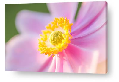 flower wall art prints anemone