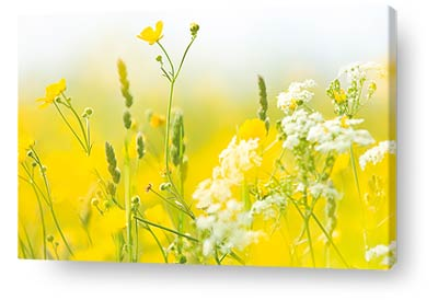flower wall art yellow wildflowers