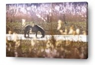 horse wall art canvas print - horse drinking from creek