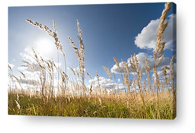 nature canvas prints wall art landscape grass