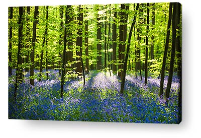 nature canvas prints wall art landscape