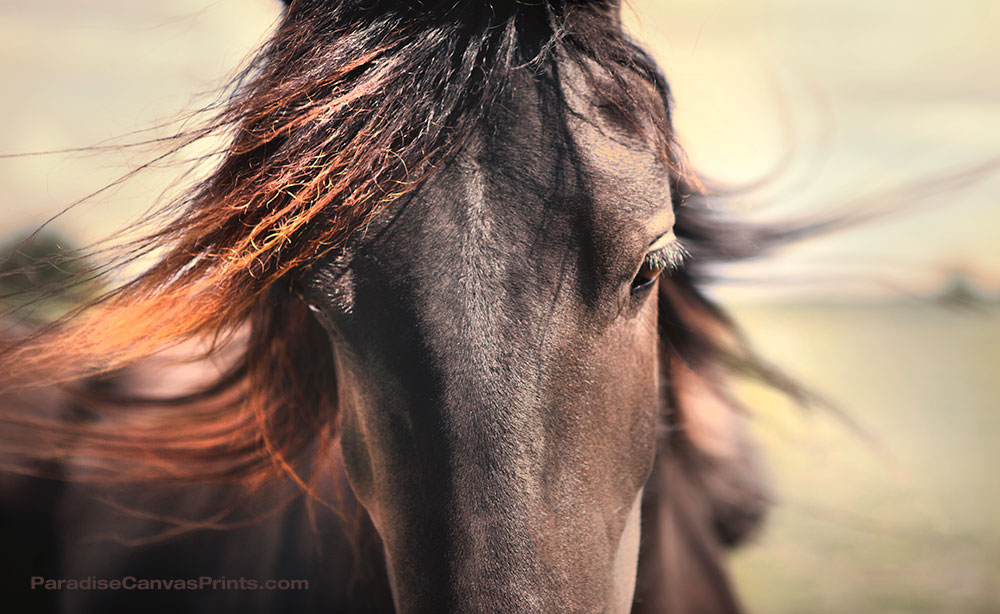 Wild horses - Portrait of a mustang horse