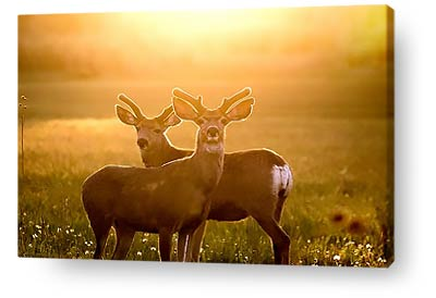 wildlife canvas prints deer sunset
