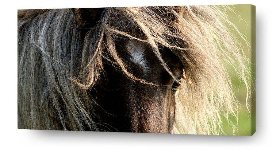 horse wall art canvas print pony manes eye
