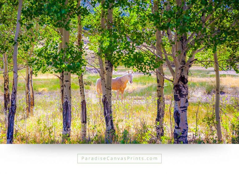 horse wall art canvas print white aspen trees