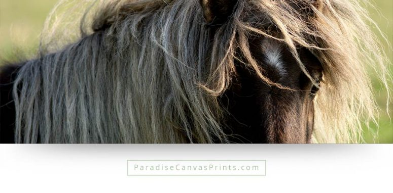 horse wall art long manes pony