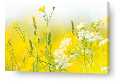 nature canvas prints wall art flowers