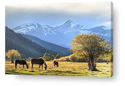 nature canvas prints wall art horses landscape